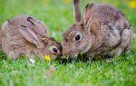 Преимущества кролиководства