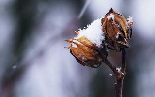 Как ухаживать за садом зимой?