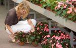 Выбор растений из питомника