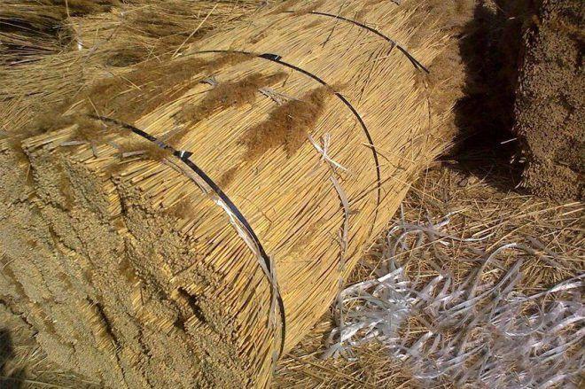 Заготовка камыша, предназначенного для утепления потолка дома с холодной крышей